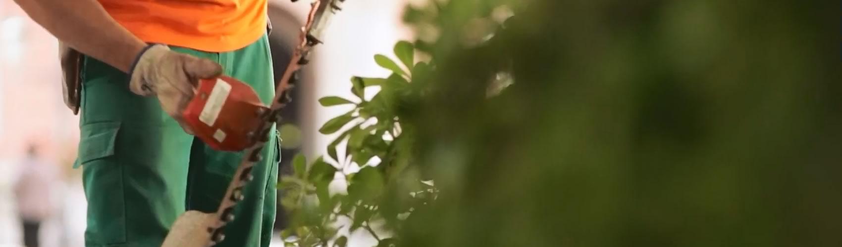 sav-agricultores-de-la-vega-0006